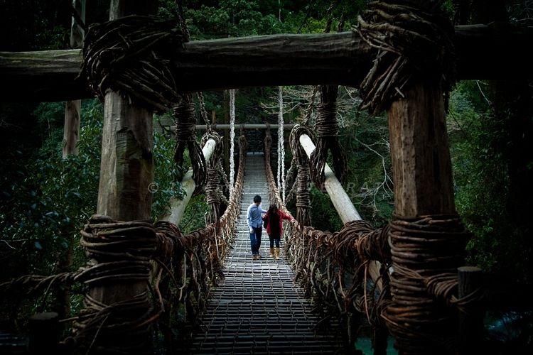 Iya-no-Kazura Bashi (Suspension bridge made of vine - Vine Bridge) #japan #shikoku #tokushima