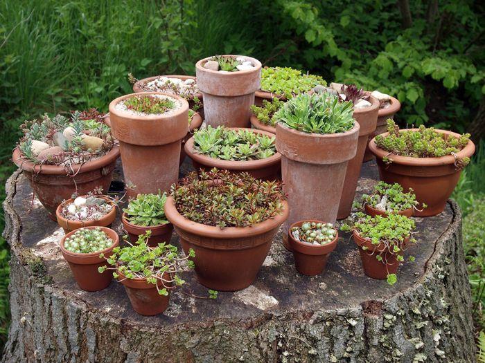 kleines topfgarten mit stil große images oder ccdbbafbbca