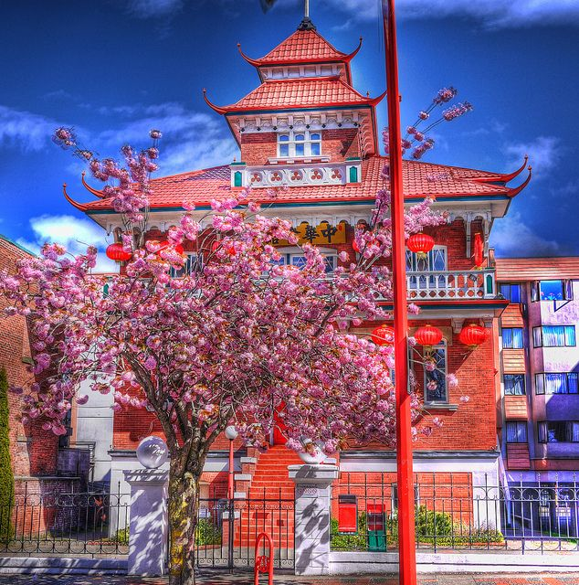 Places To Visit In Vancouver During Summer: Chinatown And Spring Blossoms . Vancouver Island . HDR