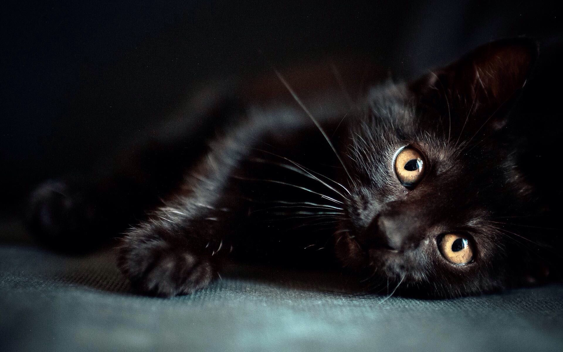 Pin by susi gahan gore on i black cats pinterest black cats