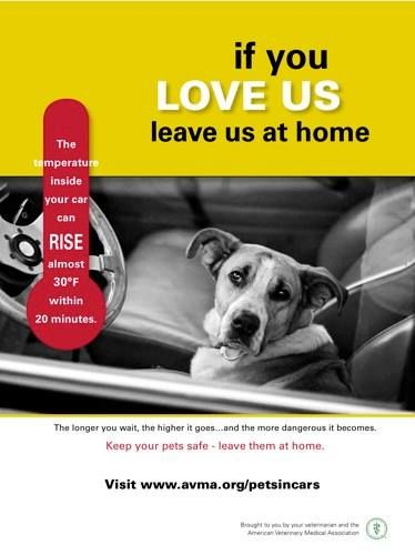 If You Love Us Leave Us At Home Pets Summer Safety Www Avma Org Petsincars Pets Dog Advice Pet Hacks