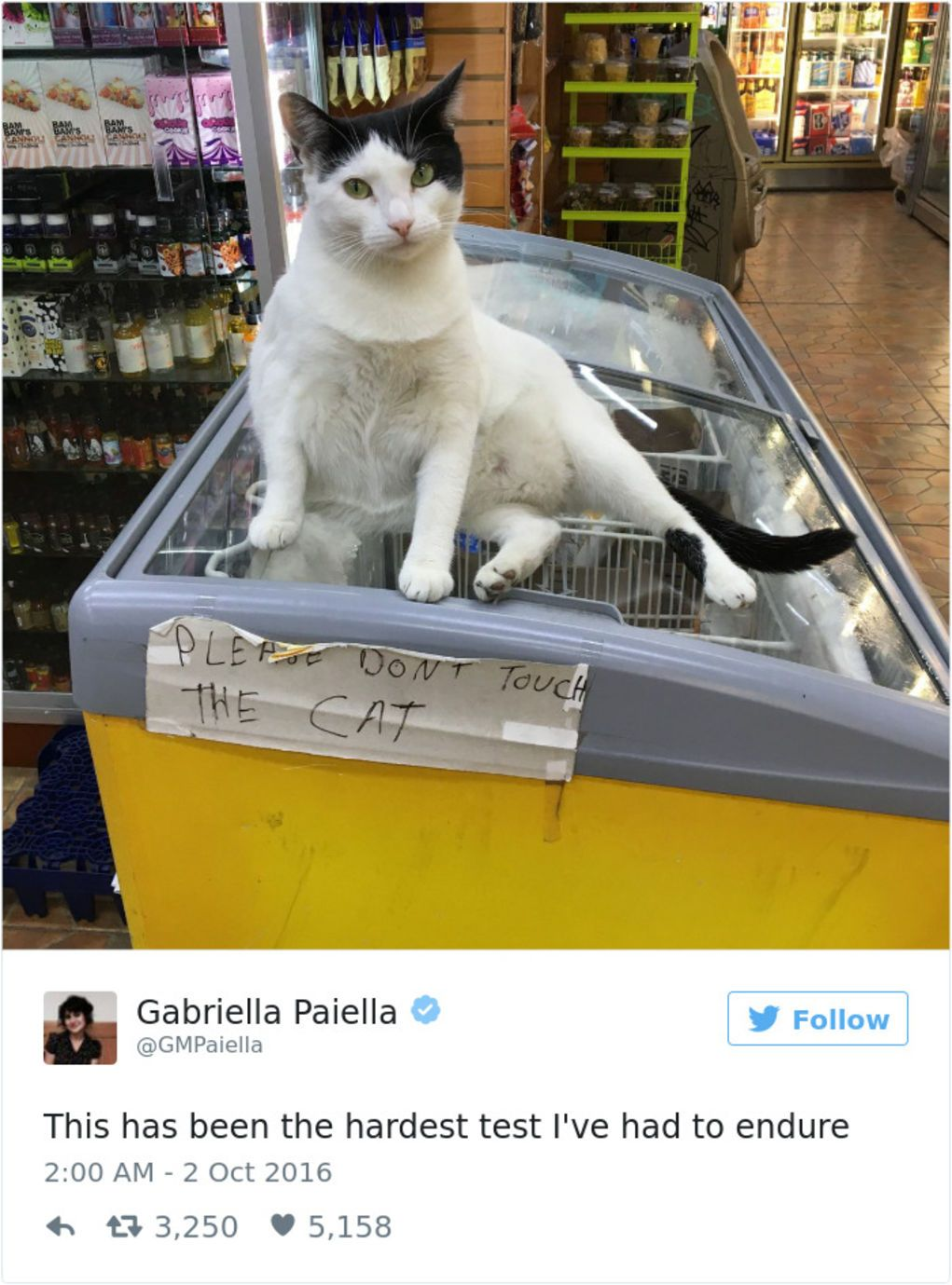 The Funniest Tweets About Cats In BlazePress Funny - The 27 funniest tweets about cats in 2016