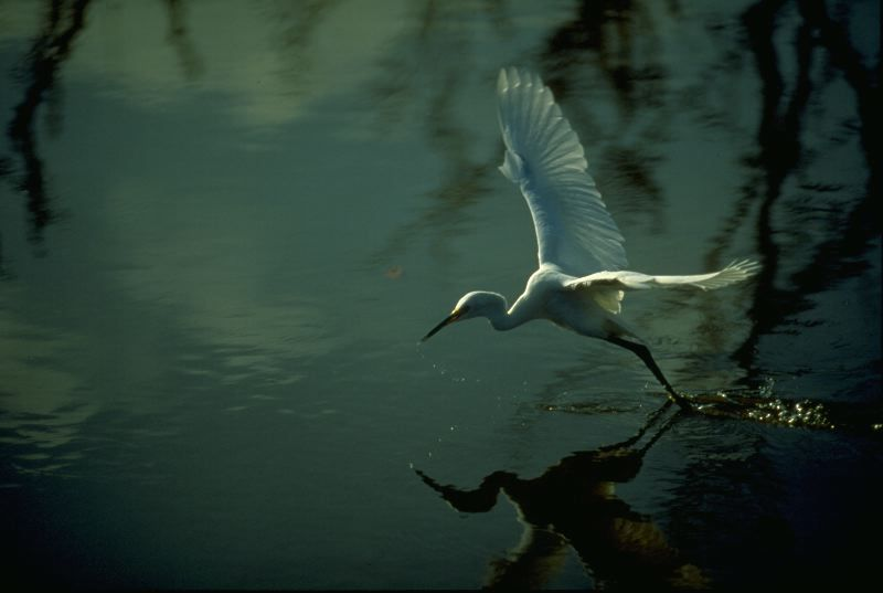 Florida Everglades 10,000 Islands - Wilderness Inquiry