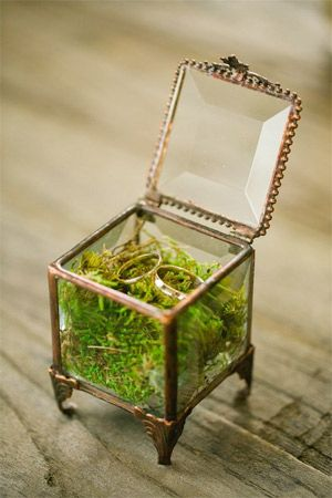Terrarium Case With Moss And Wedding Rings Brides Of Adelaide