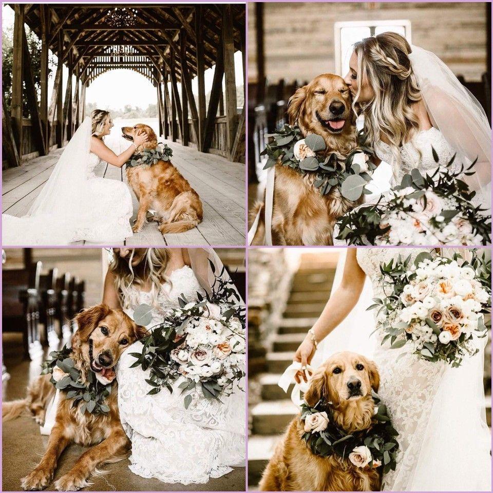 Wedding With Dog Dog Wedding Pictures Dog Wedding Wedding Pets