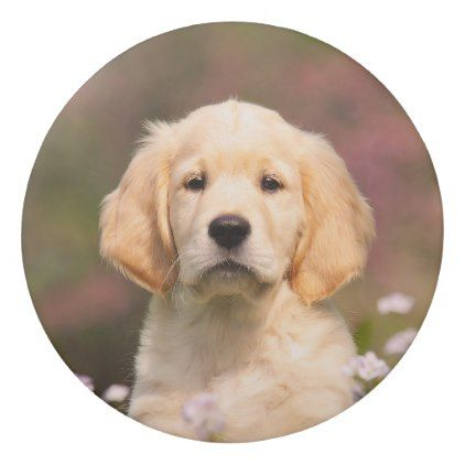 Cute golden retriever dog puppy face animal photo eraser puppy face cute golden retriever dog puppy face animal photo eraser cyo customize design idea do solutioingenieria Choice Image