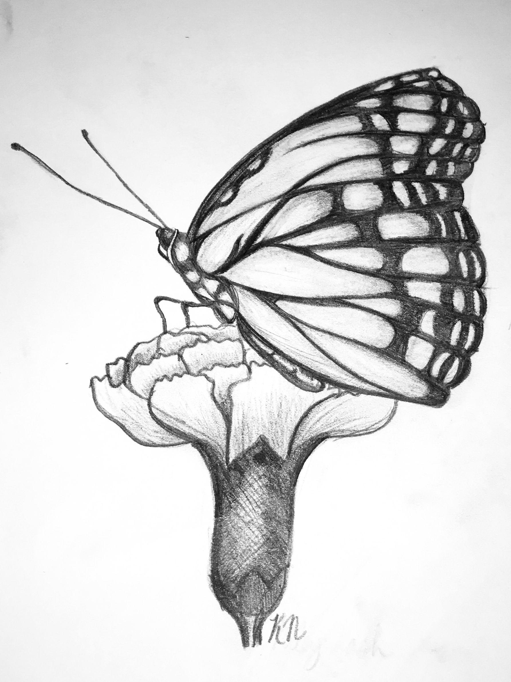Pretty Butterfly On Flower Drawing Butterfly Art Monarch