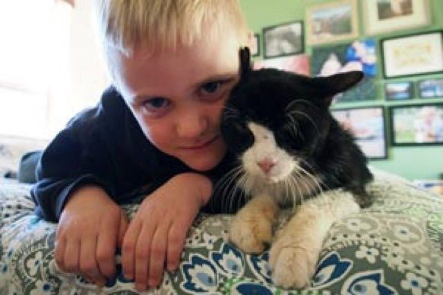 20 Year Old Cat, Dexter, Finds New Home And Has So Much Love To Give ~ Seniors need love too, so go on out an adopt one.