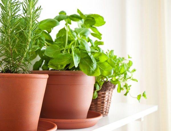 كيفية زراعة النعناع والريحان بالمنزل زنوبيا Medicinal Herbs Garden Herbal Tea Garden Herbs