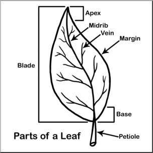 Clip Art Leaf Parts B W Labeled I Abcteach Com Large Image Teaching Biology Plant Activities School Motivation