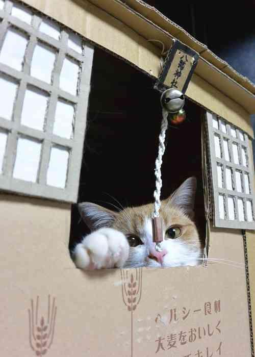 そんな顔で見つめないでー ネットで盛り上がった笑える動物ツイート20選 ペット日和 ペット 動物 猫