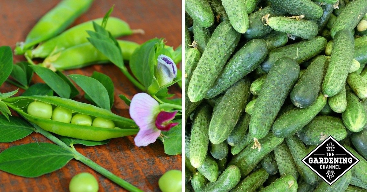 Companion Planting 7 Vegetable Pairs That Grow Perfectly 400 x 300