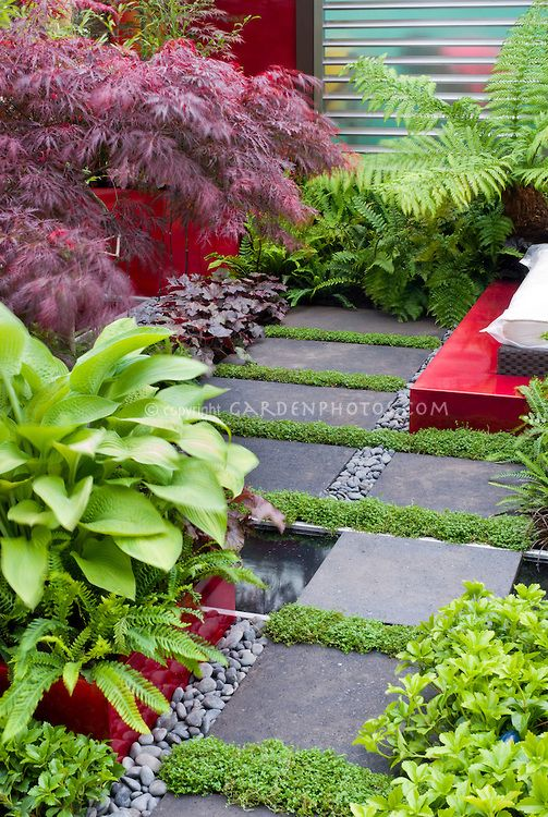 Japanese maple Acer palmatum in raised bed garden with