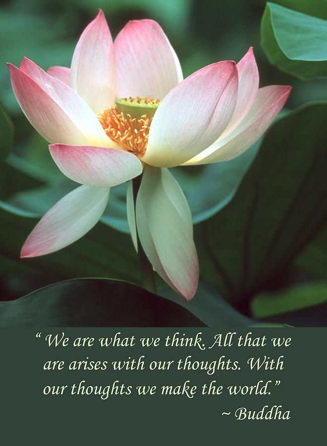 """Lotus Flower Buddha Quote 