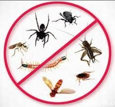 We Provide Pest Control Services In Delhi Gurgaon Noida Ghaziabad Faridabad Greater Noida Commercial Industri Termite Control Best Pest Control Termites