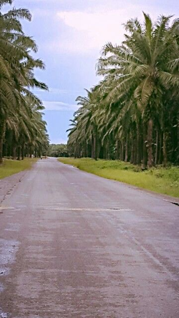 GPPOL Area, Guadalcanal,  Solomon Islands