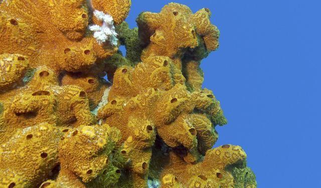 7 Datos Curiosos Sobre Las Esponjas De Mar Que Te Sorprenderan Esponja De Mar Esponja Tardigrados