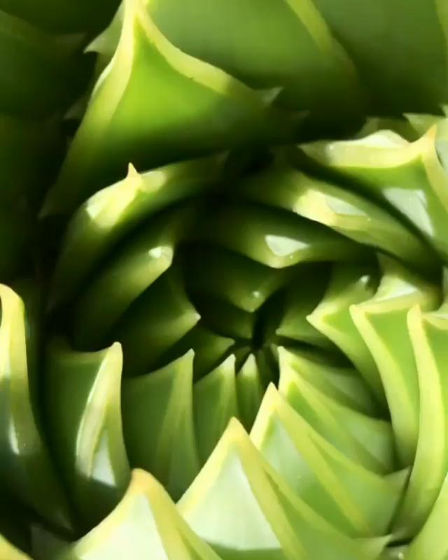 Espiral Aloe 😵 -   15 aloe vera planting Photography ideas