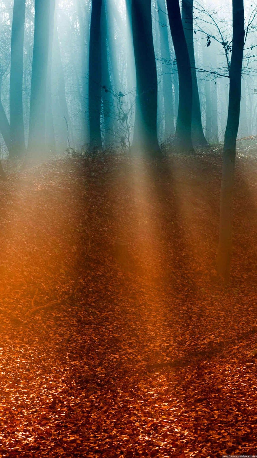 Hd wallpaper home screen - Nature Iphone 6 Plus Wallpapers Light Rays Forest Floor Iphone 6 Plus Hd Wallpaper