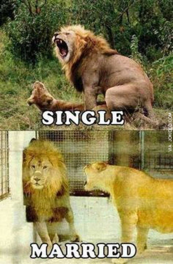 Funny Single Life Meme : Single vs married adult animal meme http jokideo