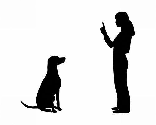 Dog Obedience Tips Dogobediencetrainingtips Dog Obedience