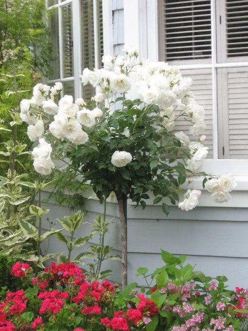 Inviting And Lush Traditional Garden Rose Trees Traditional Garden Garden Front Of House
