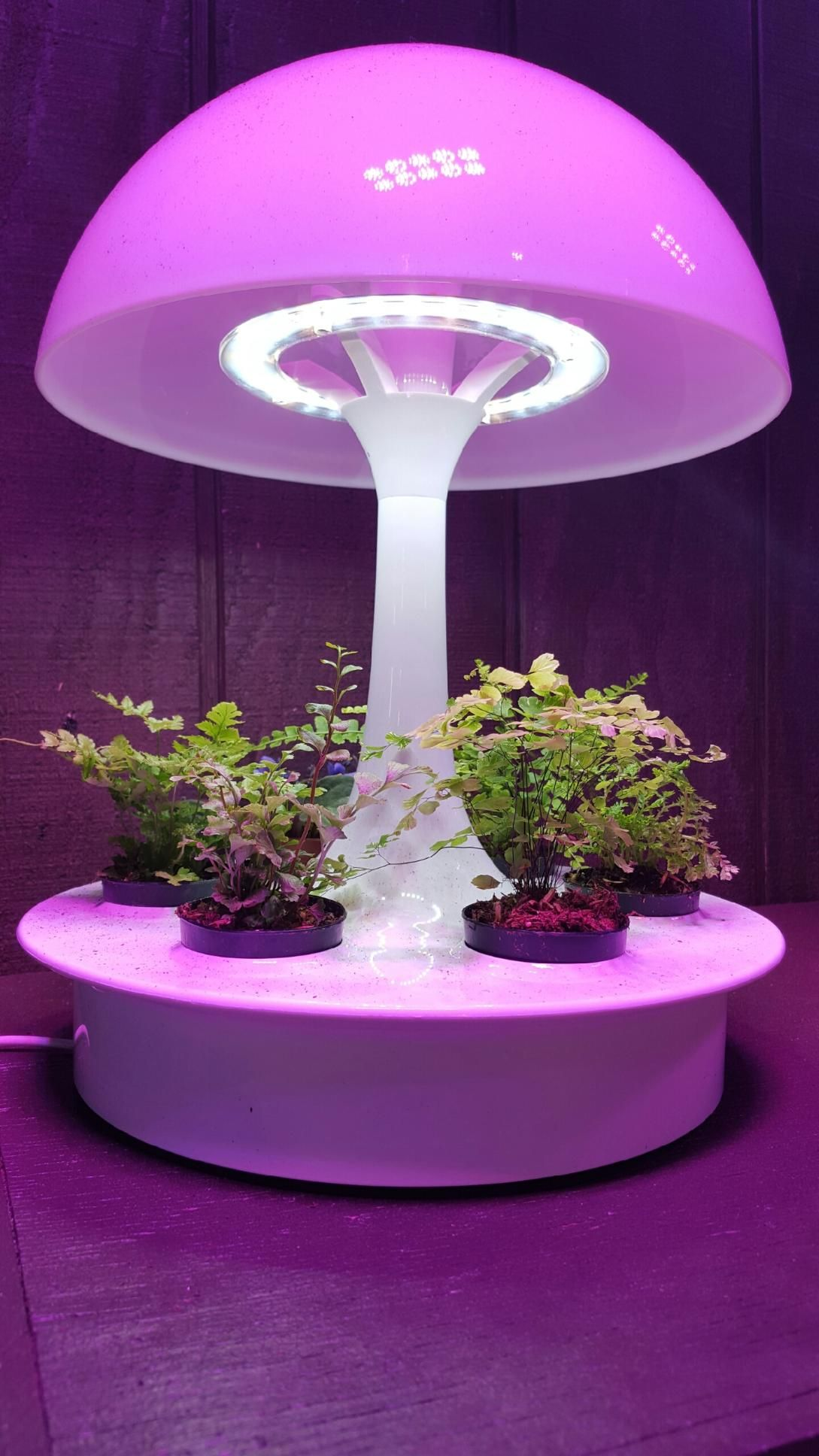 pin show hydroponically modern use light indoors to homesteading at gardening pinterest grow classes when on night their wednesday by hydroponic the lights greenery diy growing best weekly