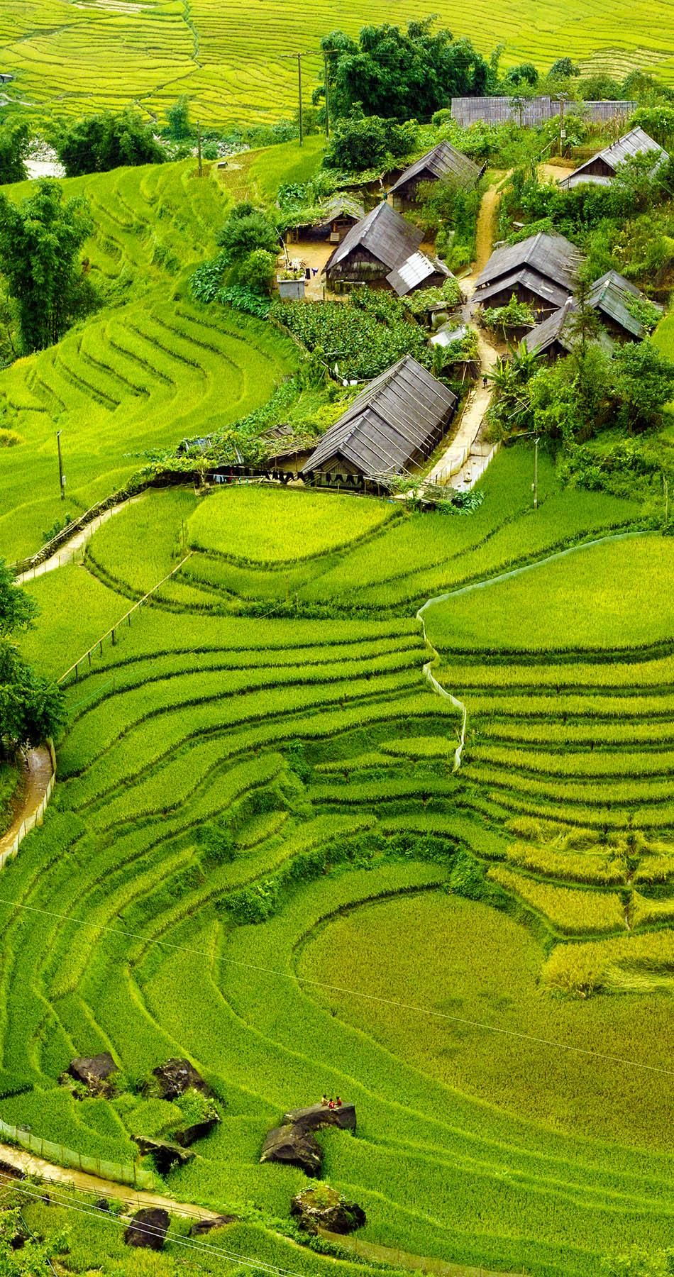 17 Unbelivably Photos Of Rice Fields. Stunning No. #15