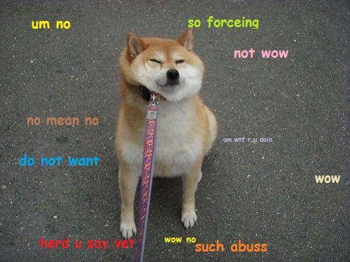 8625a020521d01a13af305ee94866da2 doge the best of the doge meme silliness pinterest doge