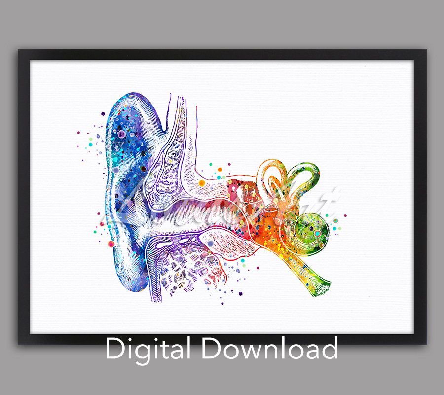 DIGITAL DOWNLOAD Ear Anatomy Art Inner Ear Watercolor Print Doctor Office Audiologist Gift Cochlea Histology Vestibular System Structure