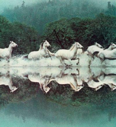all the pretty little horses...all in a row...now dash, dash, dash away all