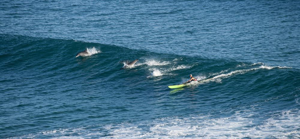 Our good mate John from Challenge Kayaks at Byron Bay with some very special aquatic friends.