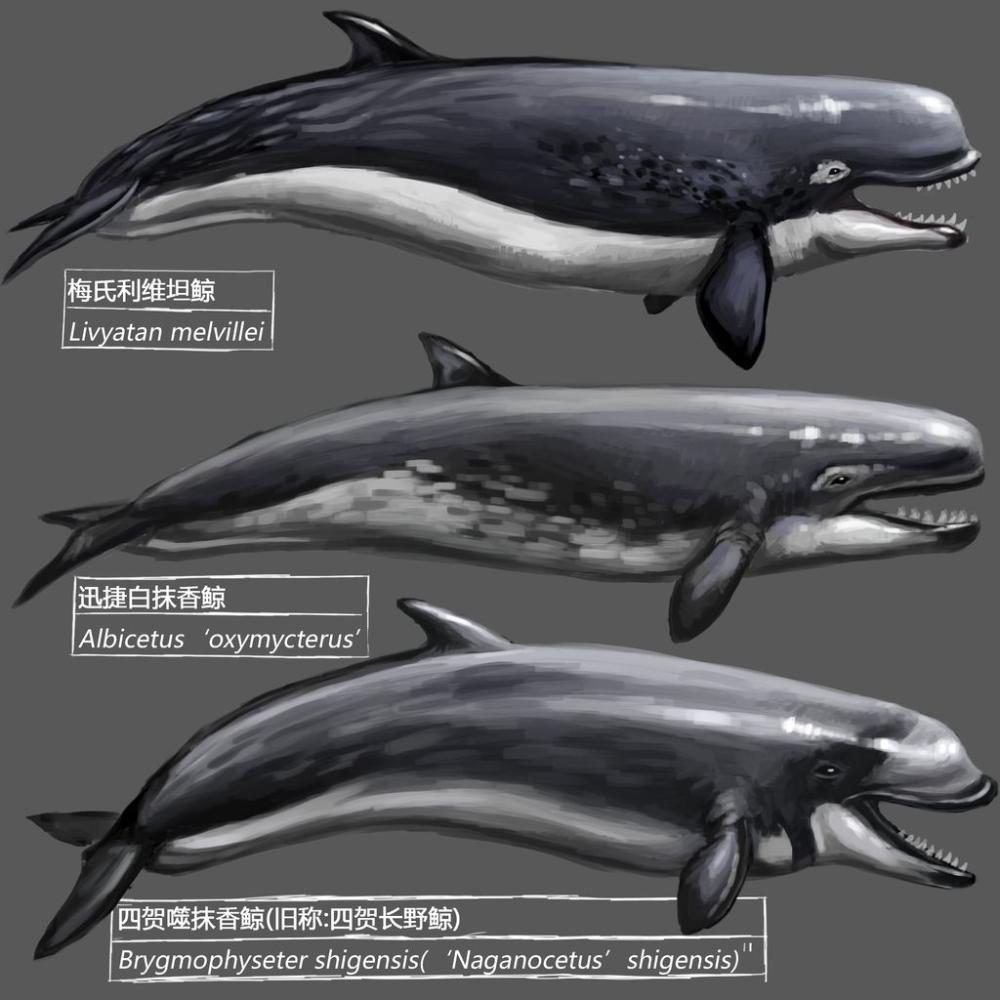 Prehistoric whale by KookaburraSurvivor on DeviantArt