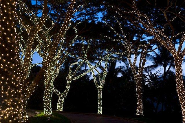 Outdoor Fairy Lights Tree, Best Outdoor Solar String Lights For Trees