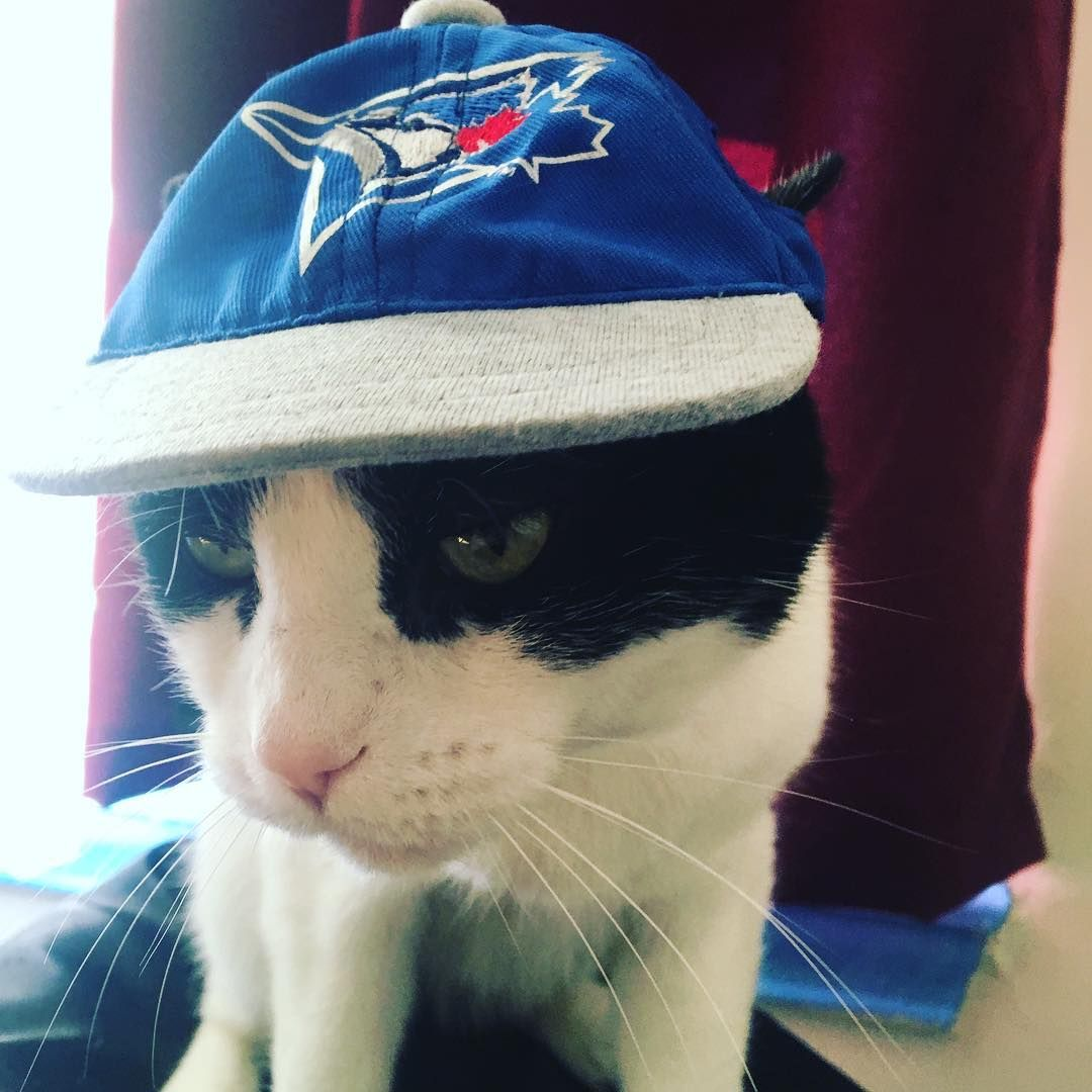 Happy Sunday friends! Here's a photo of Mr.Spot wearing his baseball cap support - Happy Sunday friends! Here's a photo of Mr.Spot wearing his baseball cap supporting the Toronto blue jays. #themeowtheory #spot #cat #catwithattitude #catwearingahat #toronto #bluejays #torontobluejays #toronto_insta #bluejayshat #baseball #blue #gojaysgo #kitty #support #notpleased #catitude #catsofinstagram #cats_of_instagram #catlove #kittycat #kittykitty #madcat #madkitty #lovehim #furrybaby #greeneyes #green