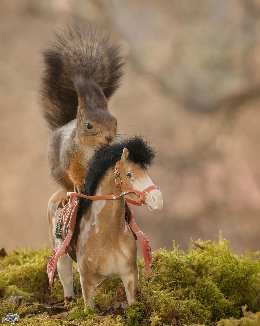 Des cureuils aux jeux olympiques a donnerait quoi - Jeux d animaux trop mignon ...