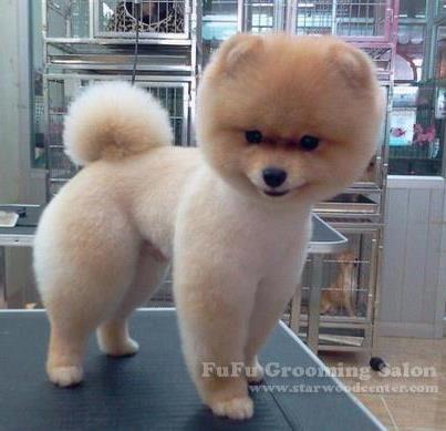 Crocheted Small Dog Neck Warmer Dog Neck Warmer Puppy Scarf Fits