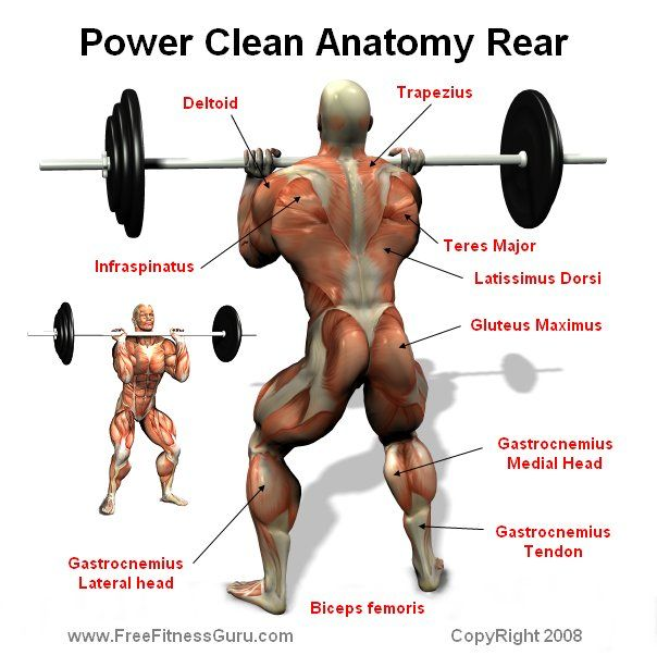 power clean - rear | M | Pinterest | Power clean, Gym and ...