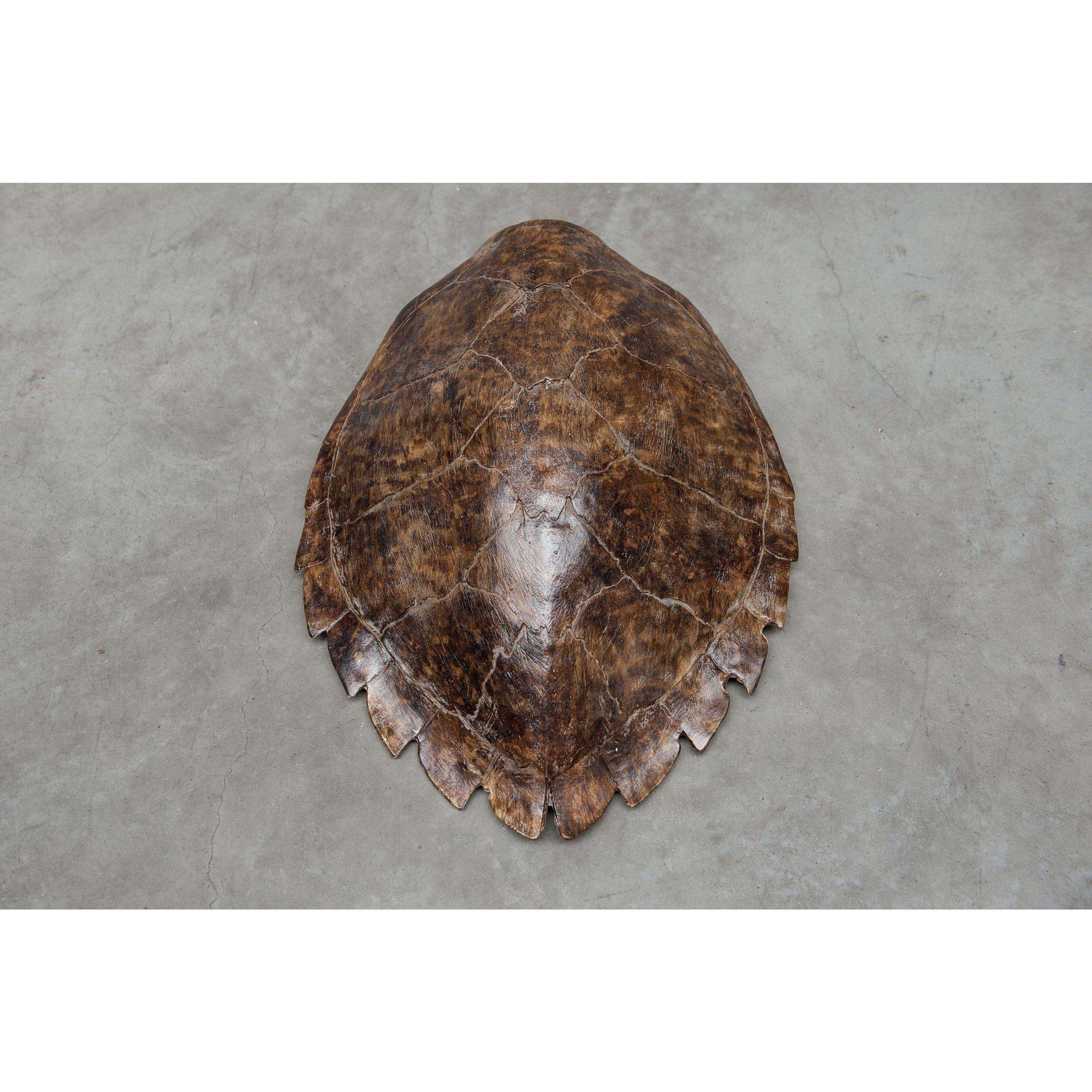 Scotch & Soda - Turtle Shell