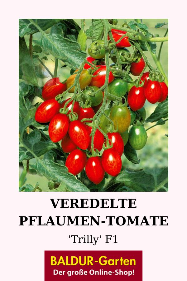 Pin Auf Veredelte Gemusepflanzen Ertragreich Robust