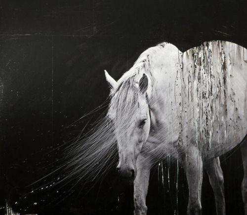 modern604 馬 馬のアート アンダルシア馬
