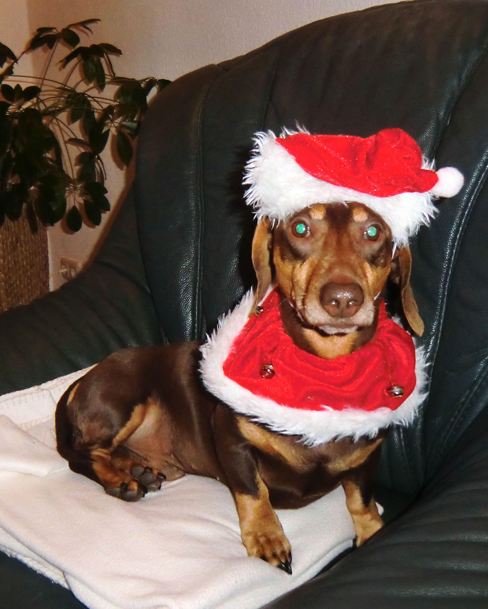 Weihnachtshund | Elch | Pinterest | Weihnachtshund und Elch