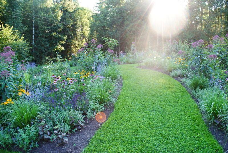 the garden Blog Kasi & Andrew Bellingham Ogród, Motyle