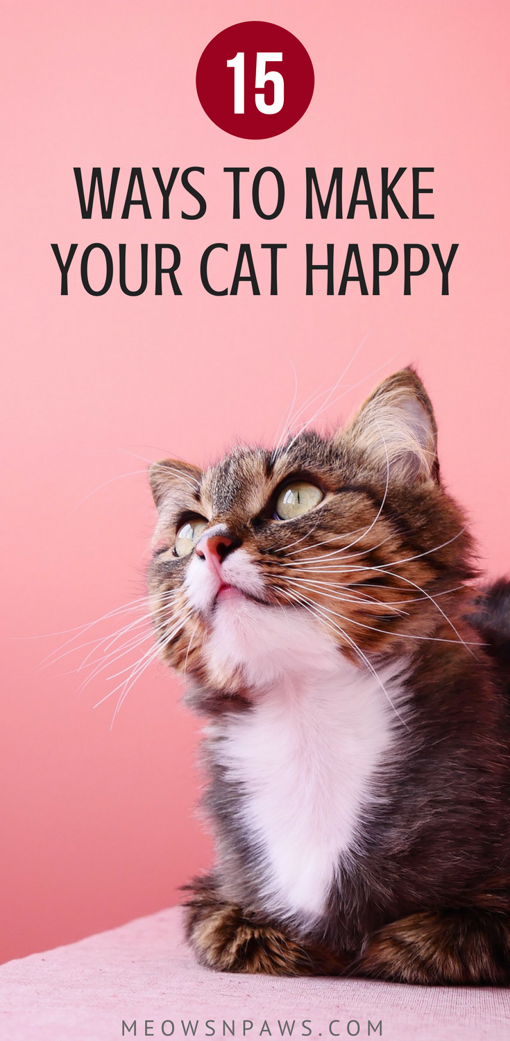 How to Make Your Cat Happy 15 Things You Can Do Right Now