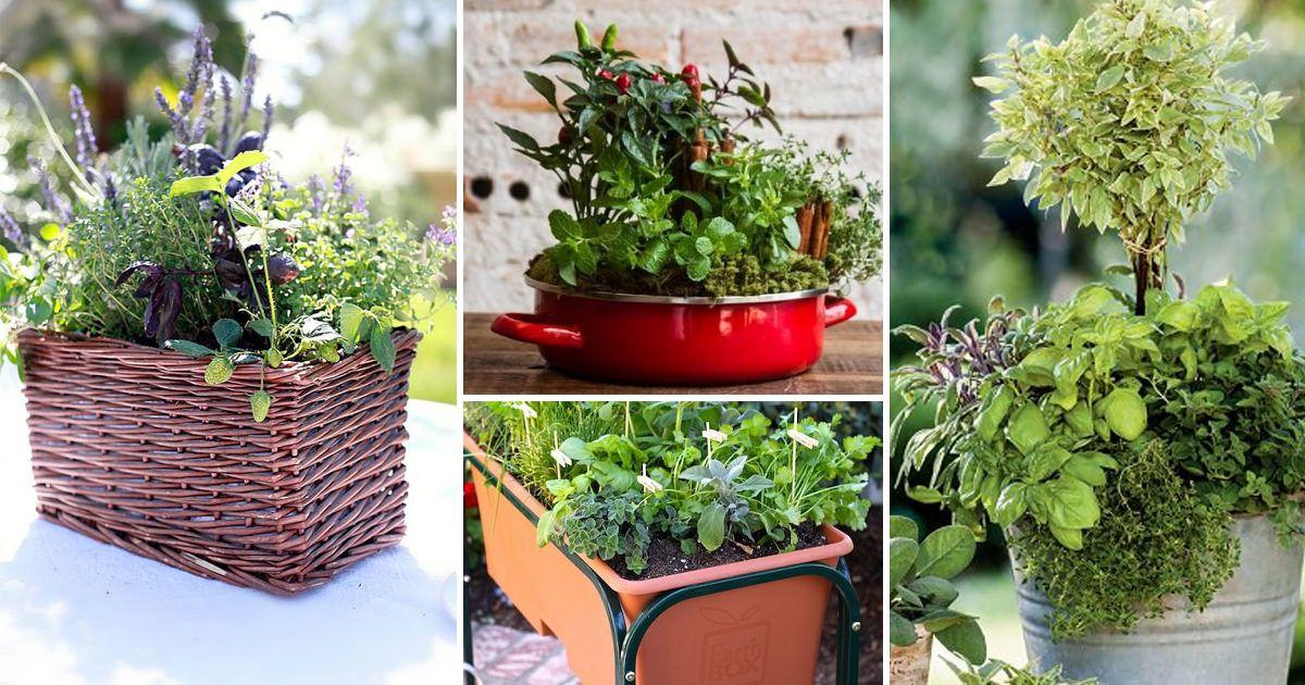 33 Best Container Herb Garden Combinations For Flavor Aroma Container Herb Garden Growing Food Indoors Indoor Vegetable Gardening