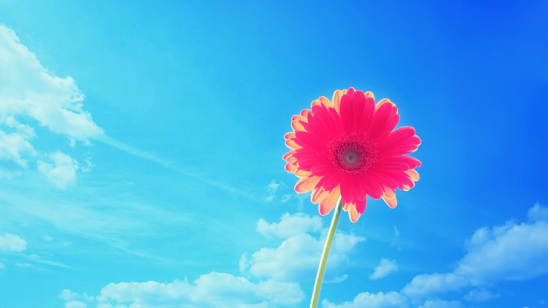 find out flower in the sky wallpaper on httphdpicorner com