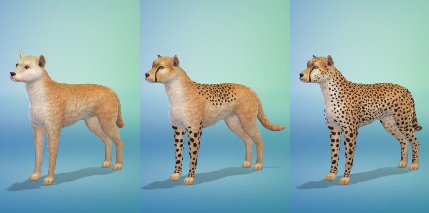 How To Create Wild Animals In The Sims 4 Cats Dogs Sims 4 Pets