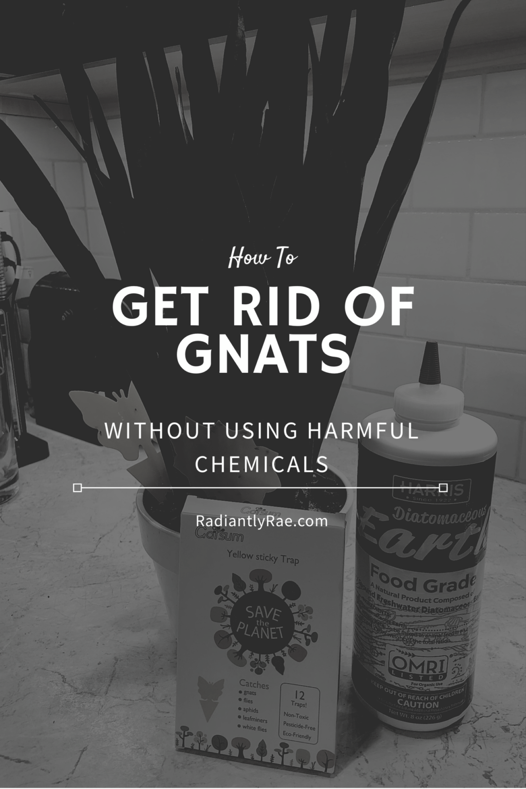 How To: Get Rid of Gnats Naturally   How to get rid of ...