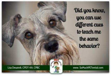 Teaching And Transferring Cues In Dog Training By Cincinnati