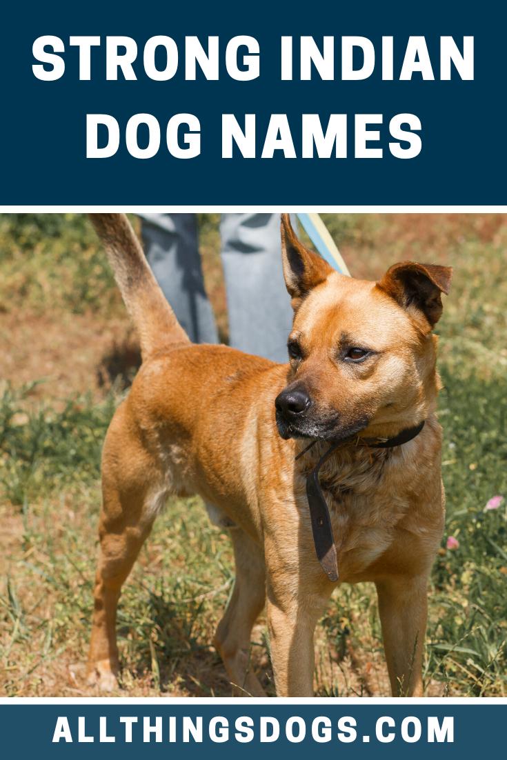 Strong Indian Dog Names Dog Names Female Dog Names List Strong Dog Names